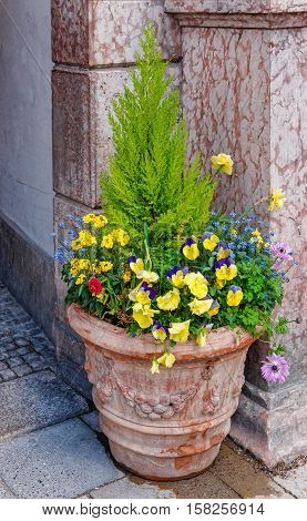 Street flowerbed with blooming flowers in the center of Munich Germany