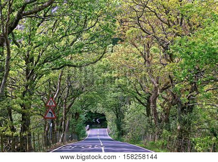 Tunnel From Green Trees And Bushes In Snowdonia National Park