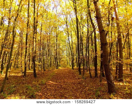 Road in deciduous forest during autumn in wild nature, colorful leaves on trees