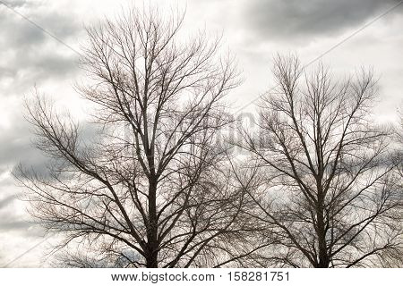 Deciduous Trees In Winter