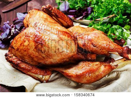Roasted Turkey. Thanksgiving table served with turkey decorated with greens and basil on dark wooden background. Homemade roasted chicken. Christmas holiday dinner