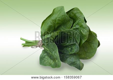 Image of spinach studio with nice soft background