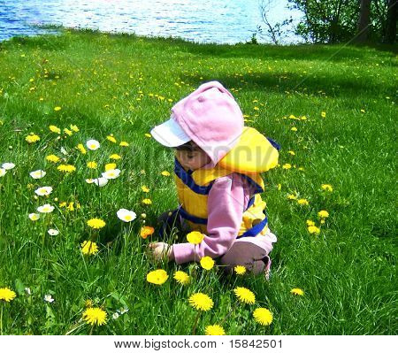 cute little girl picking wildflowers
