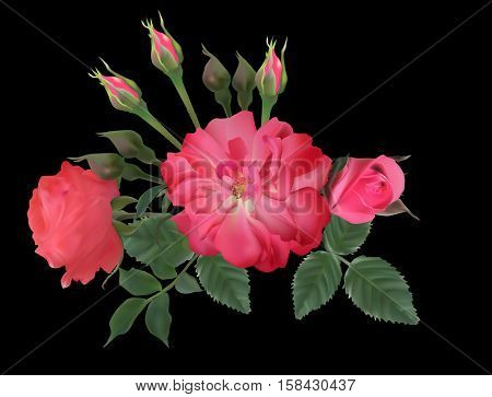 illustration with dark pink brier and roses isolated on black background
