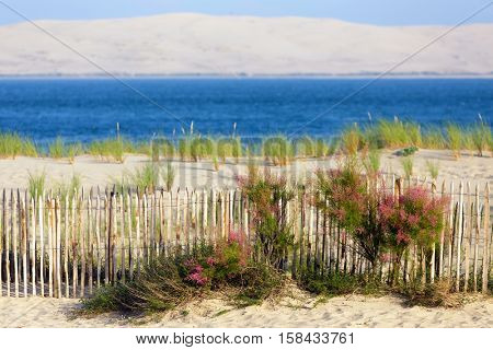 Bassin d'Arcachon and Dune du Pyla, view from the Cap-Ferret point, Bordeaux, Gironde, France
