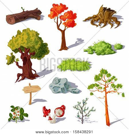 Forest elements set with coniferous and deciduous trees mushrooms and strawberry grass and stone isolated vector illustration