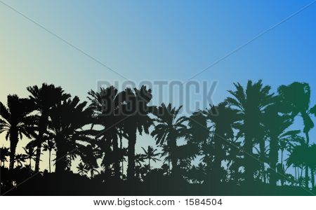 Palm Tree silhouetten