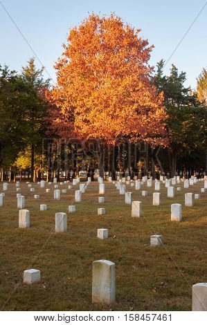 Lone Autumn Tree Stands in Civil War Battlefield