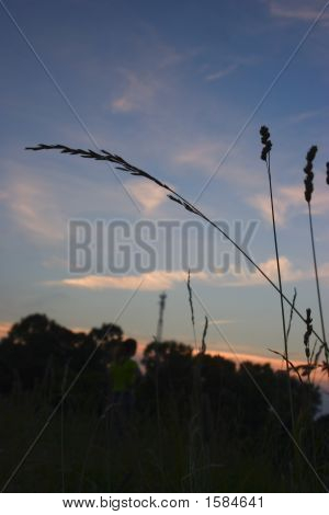 A Photo Of One Grass In The Sunset 3