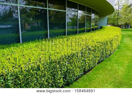 Green hedge and mowed lawn along office building wall
