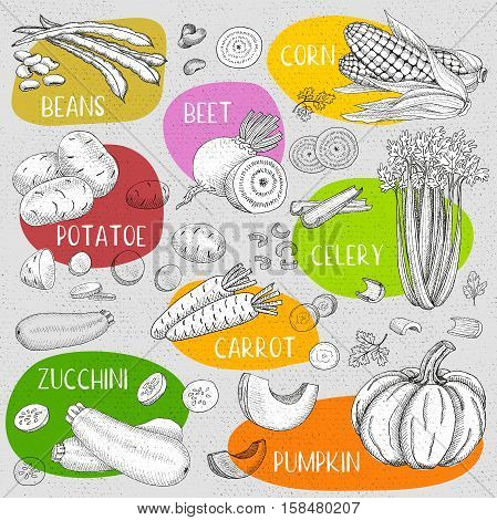 Set of chalk sketch hand drawn, in sketch style, food and spices, old paper textured background. Beans, corn, beet, potato, celery, carrot, pumpkin, zucchini. Hand drawn vector illustration.