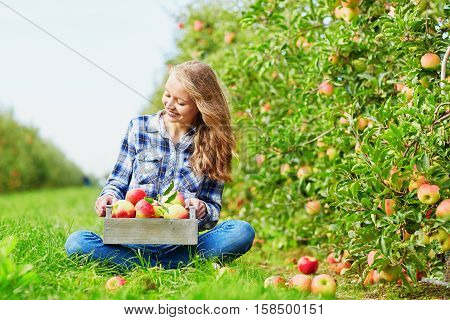 Woman Picking Apples In Wooden Crate On Farm