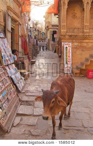 City Street With A Sacred Cow Walking Near Newspaper Shop, Jaisalmer, India