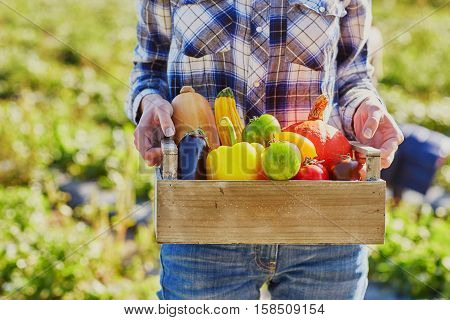 Woman's Hands Holding Wooden Crate With Fresh Organic Vegetables