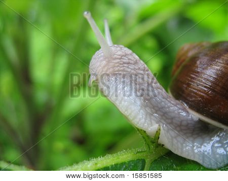 Snail In Bush