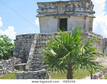 Palm Tree And A Small Maya Temple, Tulum, Mexico