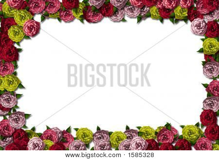 Roses Background Card