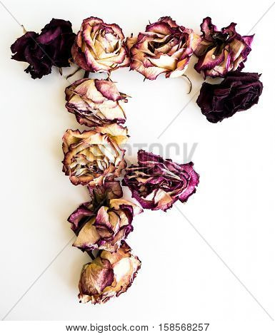 Rose dried Initials letter F.