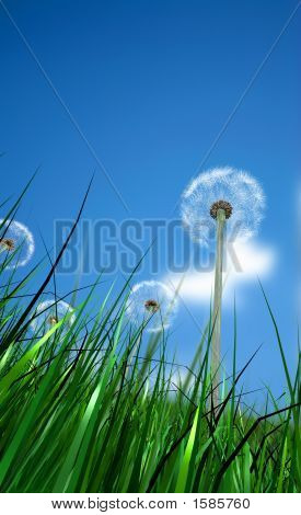 Grass And Flowers With A Blue Sky