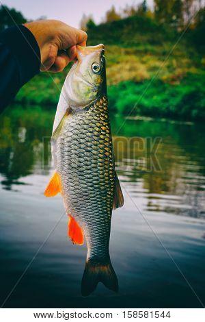 Fisherman is hanging the big chub, safe lip grip