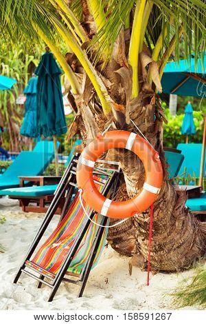Lifebuoy on palm tree at the beach