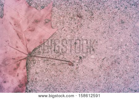 Abstract background from fallen leave wjth matte efect