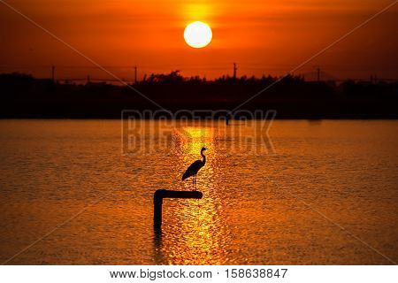 Silhouette of a bird perched on a piling with sunset lake background