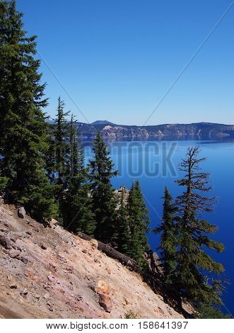 Trees growing on the rim of Crater Lake on a sunny summer day.