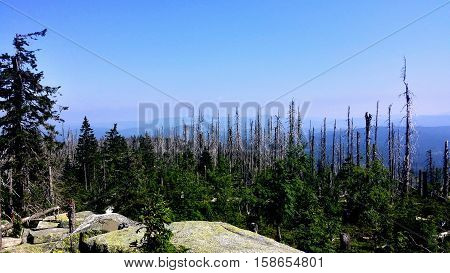 A forest was destroyed from pest. The trees are dried-up.