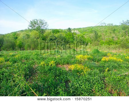 Prairie Scene - Wisconsin