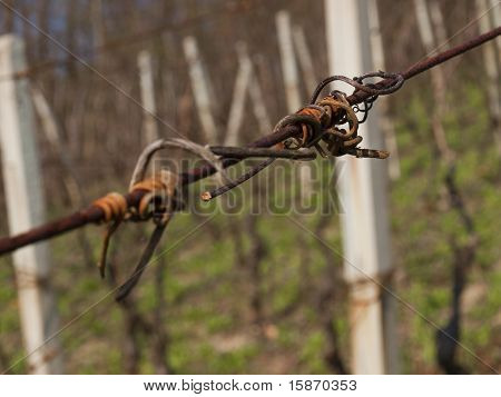 dried vine grips on rusty wire