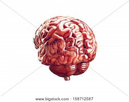 Realistic 3d Illustration of human brain with blood vessels isolated