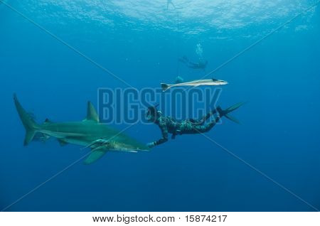Free diver and bull shark