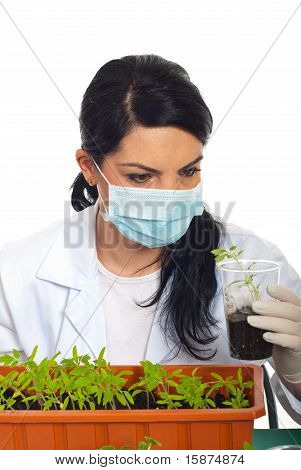 Scientist Examine New Plant Of Tomato