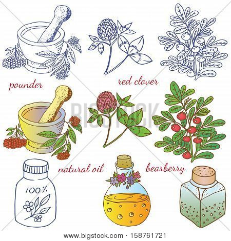 Herbs spices and seasonings collection. Vector hand drawn illustration of different herbs and bottles