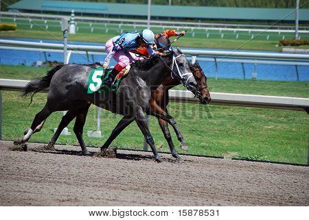 Dead Even Horse Race