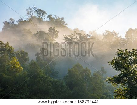 Green foggy forest in morning lights. Nepal, Manaslu trek