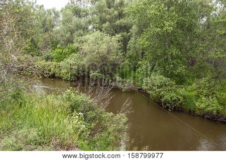 The quiet river in the dense wood