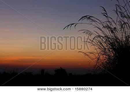 the grass and twilight sky