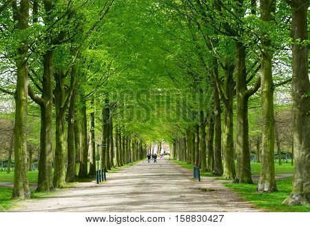Spring alley in Clingendael park, Den Haag, Netherlands