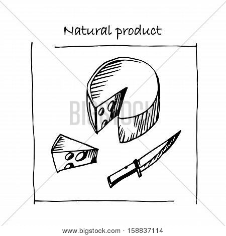 Vector sketch of the cheese. Great for markets, grocery stores, shops, organic food label design. Stock illustration.