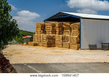 The hay storage shed full of bales hay on farm agricultural kibbutz in Upper Galilee Israel