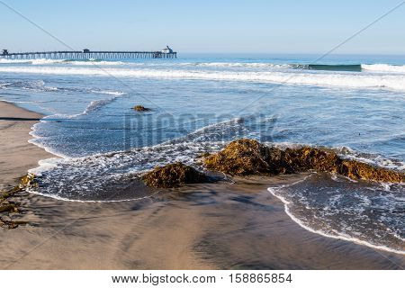 Seaweed on beach with waves and the Imperial Beach fishing pier in the background.