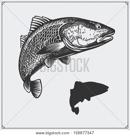 Vector illustration of a fish. Silhouette of fish.