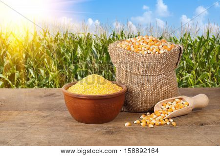 Dry uncooked corn grains in burlap bag and corn groats in bowl on wooden table with corn field with sunshine on background. Agriculture and harvest concept. Maize with maize field background