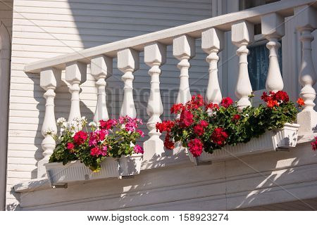 Flowers on the balcony. Small white columns and railing. Petunias of bright red color. Plants need care.