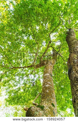 Beautiful green Forest trees