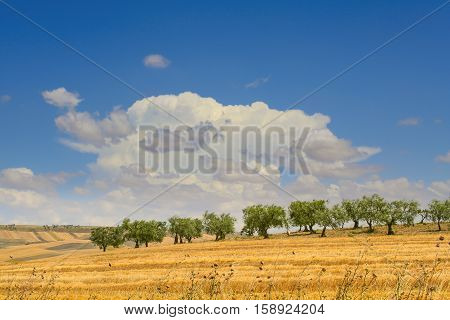 Hilly countryside with olive grove  dominated by clouds after the harvest.Italy