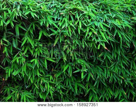 photo green reed leaves as a source for printing and design