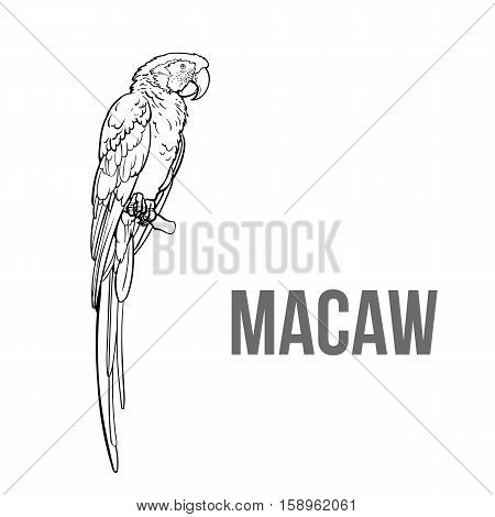 Hand drawn red green-winged macaw parrot seating on a tree branch, colorful sketch style vector illustration isolated on white background. Hand drawing of macaw, scientific ornithological illustration